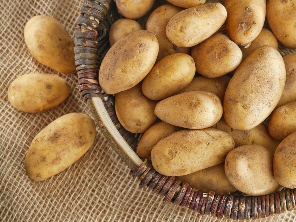 Le régime alimentaire des pommes de terre pour perdre du poids
